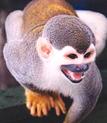 Monkey_5